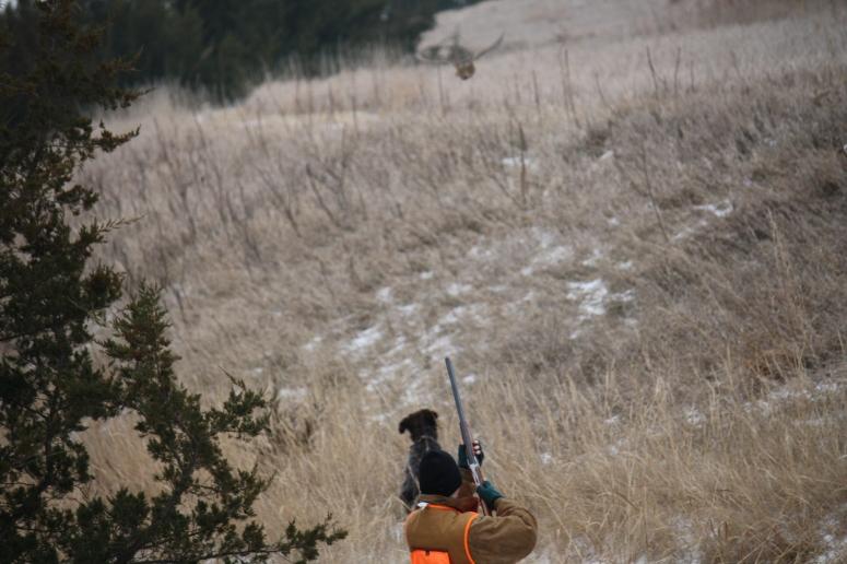 Hunter-Dog-Bird