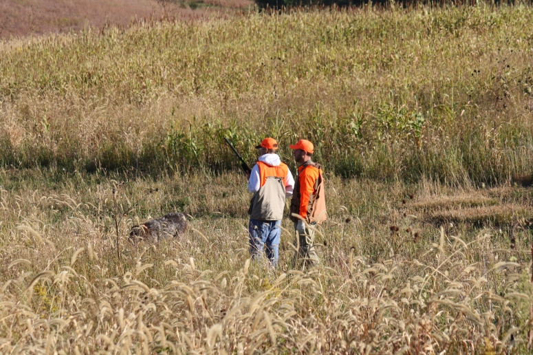 Wirehaired Pointing Griffons Pheasants Forever