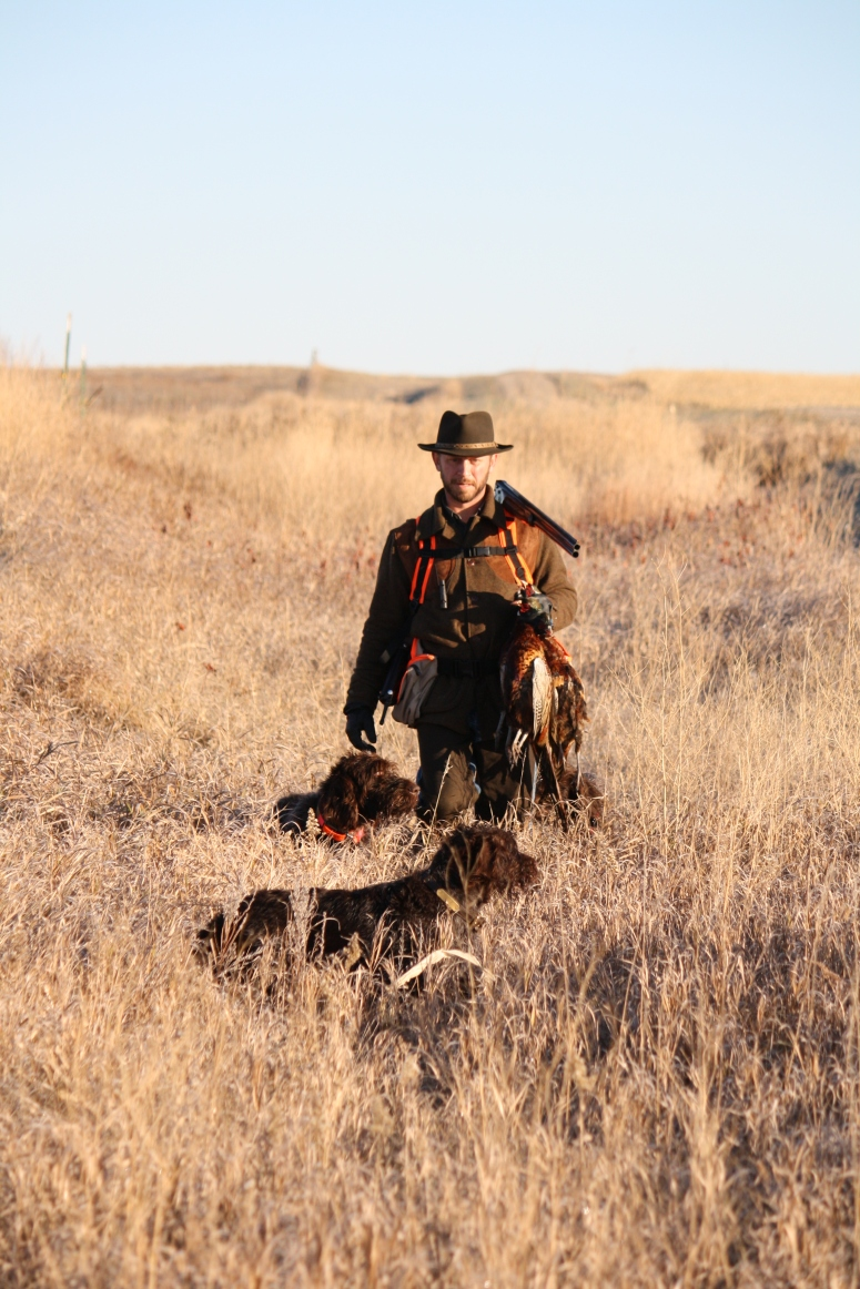 Wirehaired Pointing Griffons North Dakota Hunting