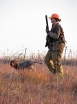 Nebraska Pheasant