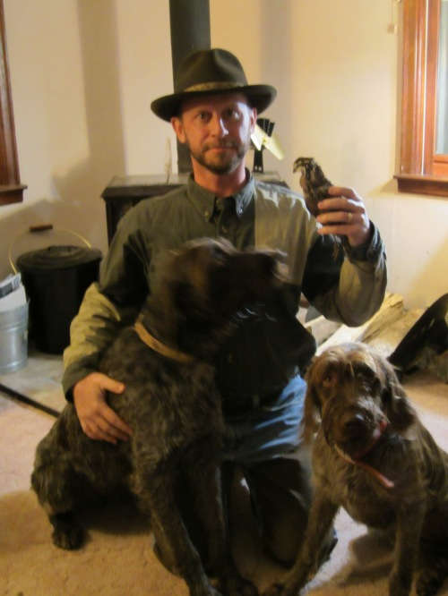 Quail and Wirehaired Pointing Griffons
