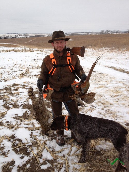 Wirehaired Pointing Griffon pheasant and raccoon