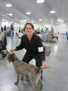 Wirehaired Pointing Griffon dog show