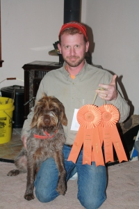 Wirehaired Pointing Griffon Junior Hunter