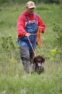 Wirehaired Pointing Griffon NAVHDA NA