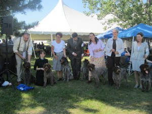 Wirehaired Pointing Griffons Dog Show
