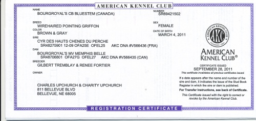 BB's AKC Registration Certificate