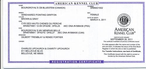 BB's AKC Registration Certificate