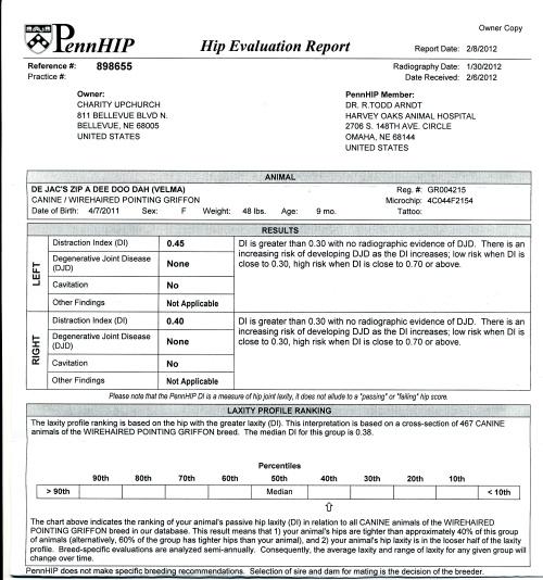 Velma's Penn-HIP certificate