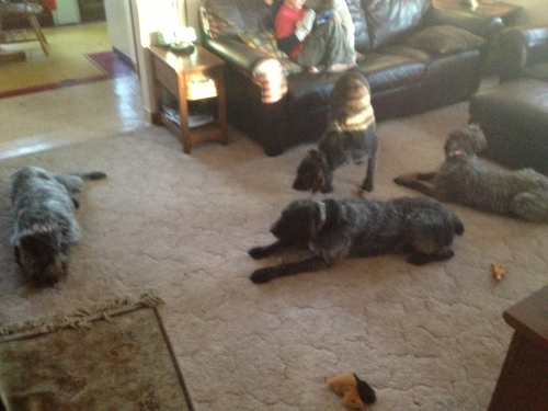 All four dogs inside: Mae Sam, Sue and BB