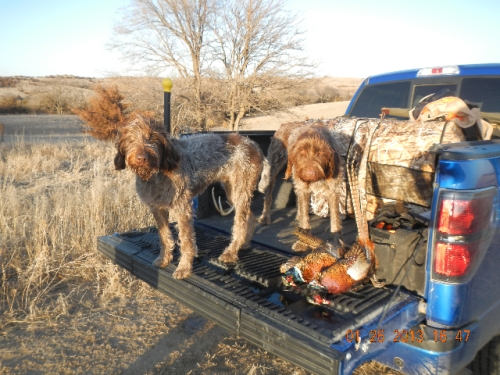 Dottie and Bear found some roosters!