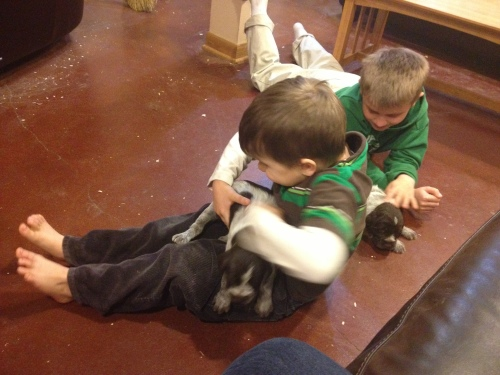 A bit of boy roughhousing with puppies