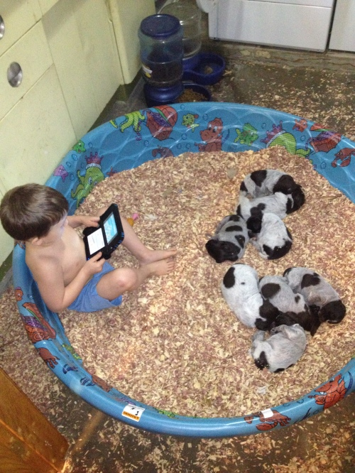 Caleb plays a handheld video game in the puppy pool