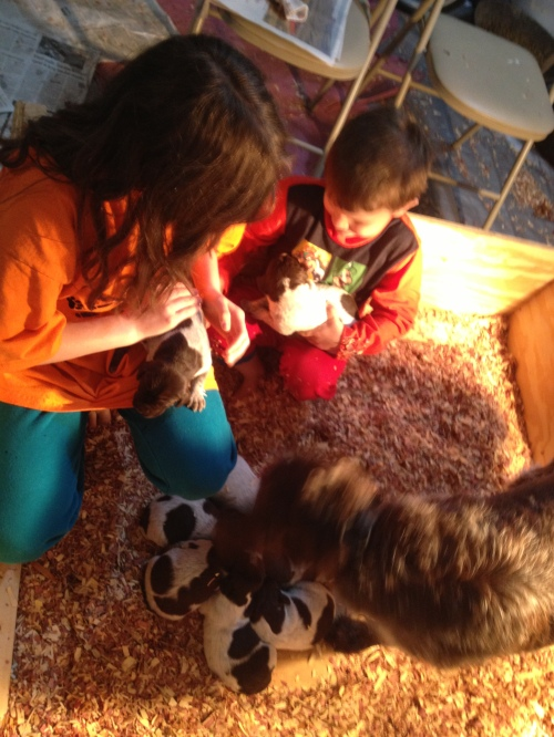 Cordelia and Caleb hanging out with Sue and the puppies