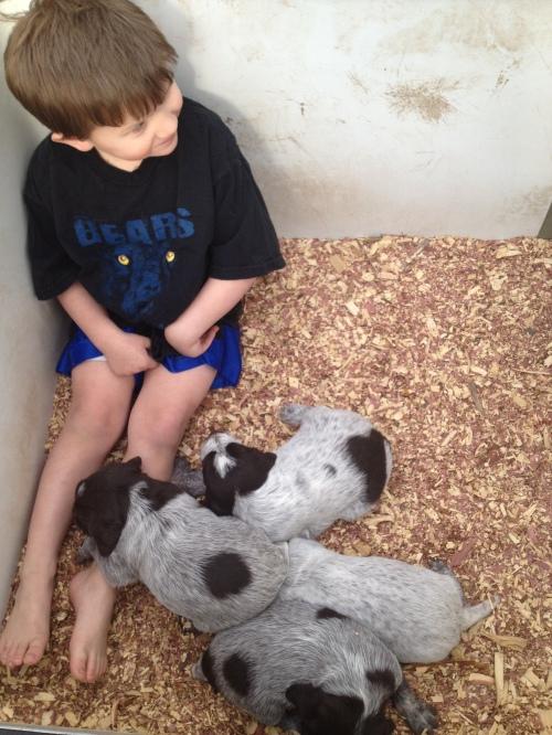 Caleb is head puppy socializer.