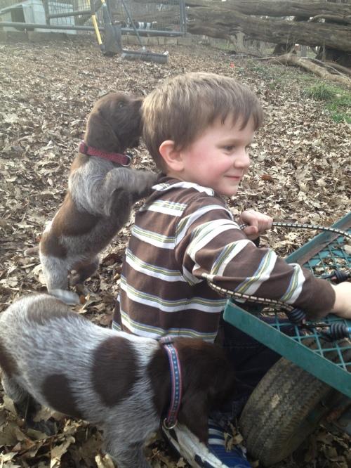 Caleb enjoys a puppy attack