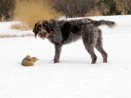 TracHer with squirrel #7