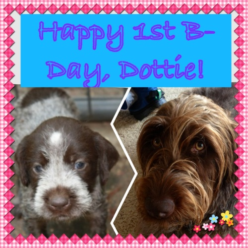 "Happy 1st Birthday ""D"" Litter and Dottie!!"