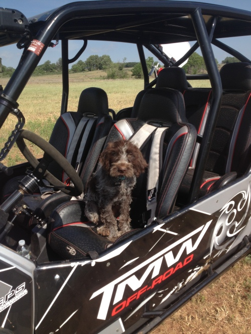 Zoey in the dune buggy