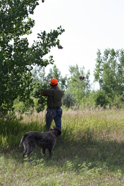 Moment of Impact: BB stands by as a bird gets hit in front of the smaller cottonwood