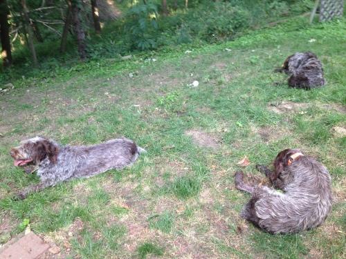 Sitting in the yard: Mae, BB and Sam