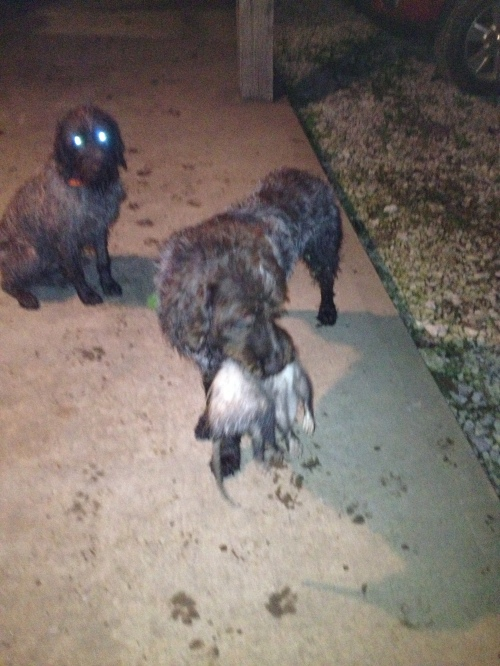 BB on left and Sam with the opossum