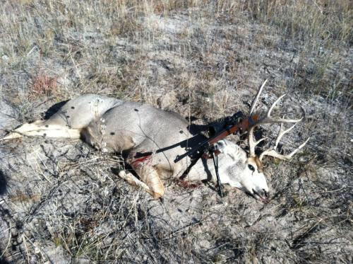 Charles's mule deer buck and rifle out on the prairie