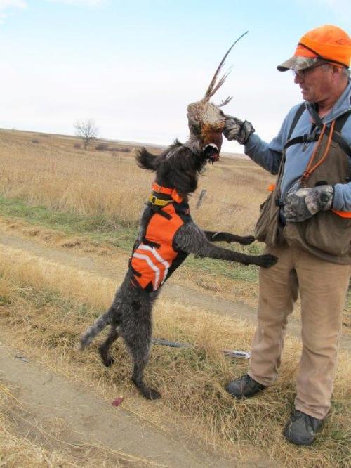 Hunting Dog Training Nebraska