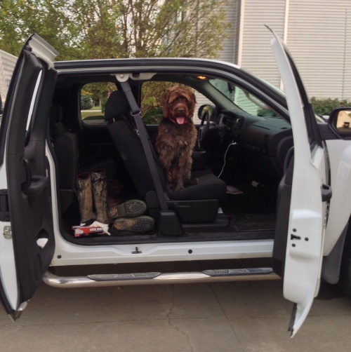 "Gomer says, ""Who needs a dog box, I get to ride in the front?!"""