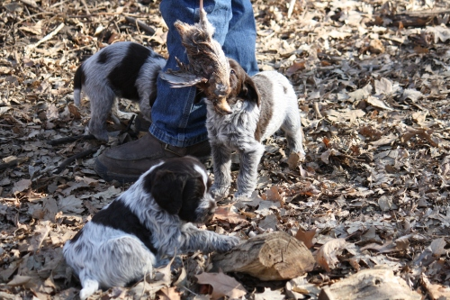 Sniffing the quail