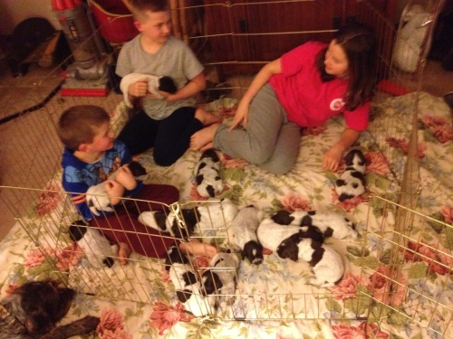 Caleb (4), Conrad (9) and Cordelia (12) hanging out with the puppies