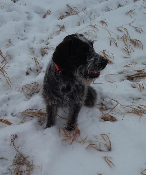 Belle in the Kansas snow