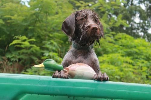 Willow is proud of her duck dummy