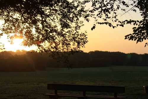 Sunrise over Branched Oak Field Trial Grounds