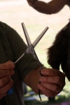 Lorraine's thinning shears