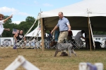 First time in the ring: owner-handler Glenn Reider