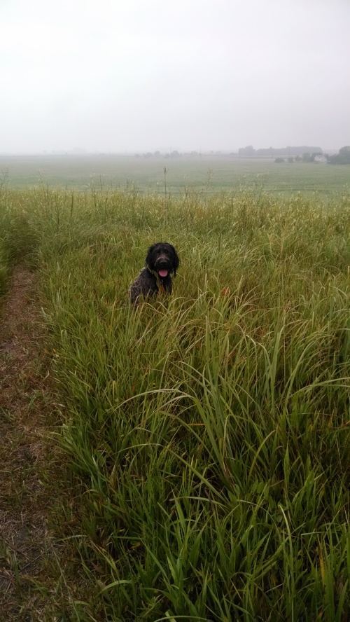 Josie in the field