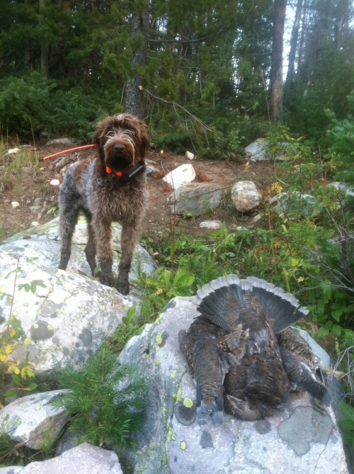 Harry and Blue Grouse