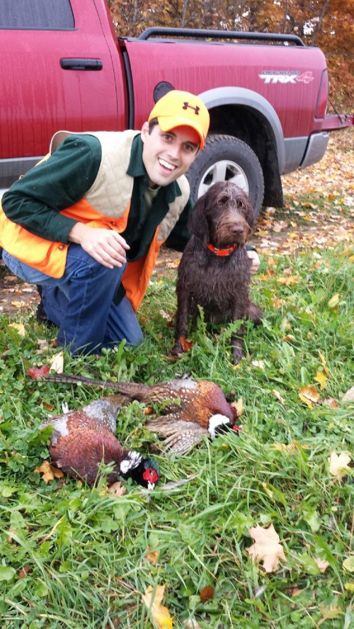 Moose and the elusive Maine roosters