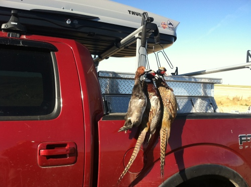 Drake Canvasback and two roosters