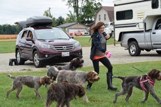 Sandi and Zoey overtaken by the gang of griffs
