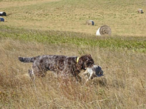 TracHer on retrieve in North Dakota
