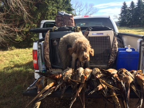 Duncan and a big pile of ND roosters