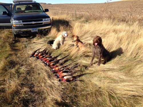 Trucks, dogs, and birds is where it's at!