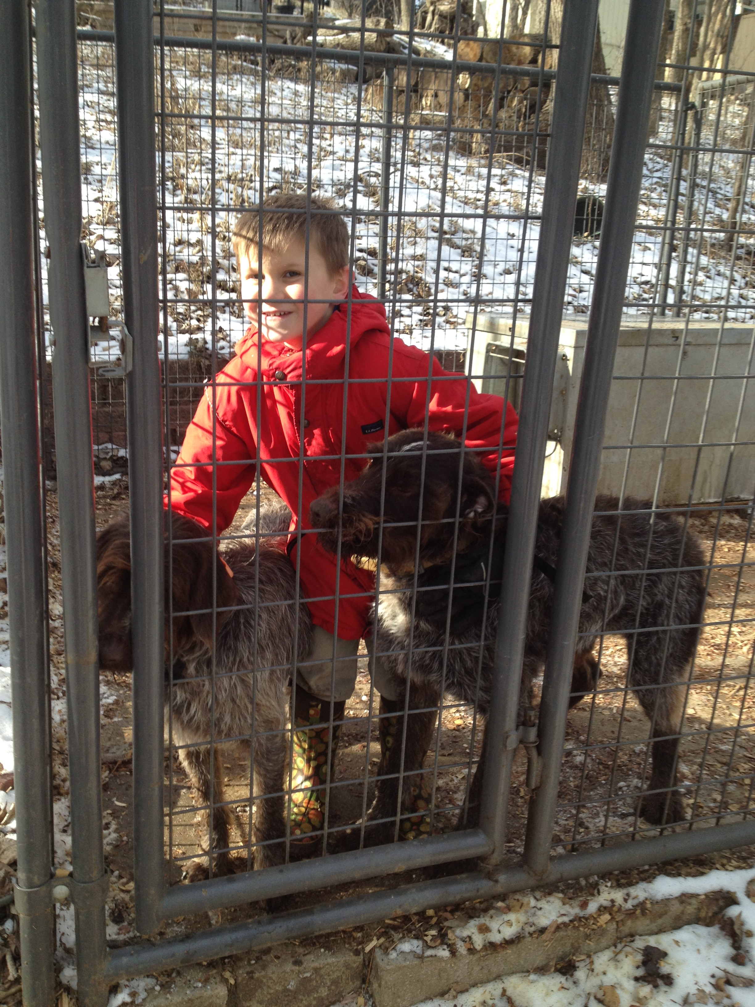 Caleb let himself into the kennel with BB and Sam while Charles and Conrad were shooting archery.