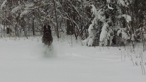 Josie's snow run