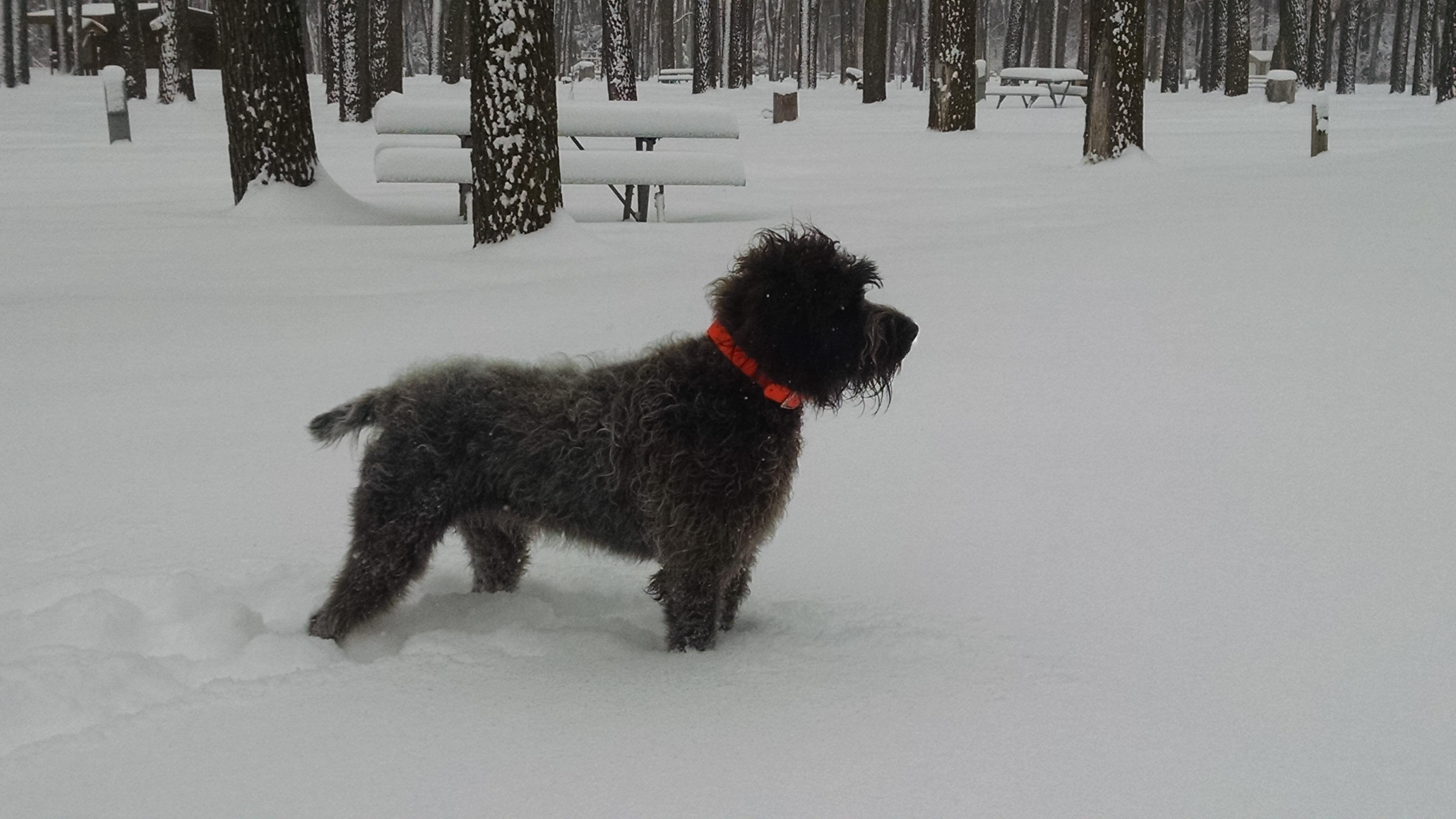Josie snow profile