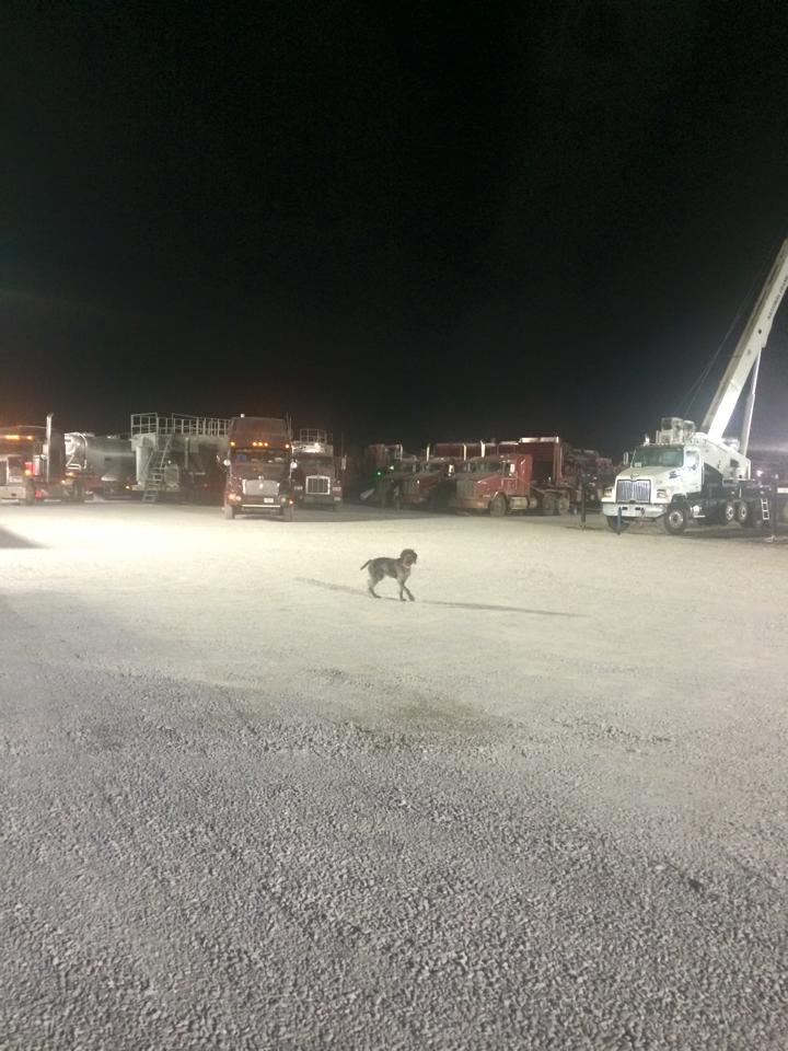 Zoey scoping out the trucks for snacks