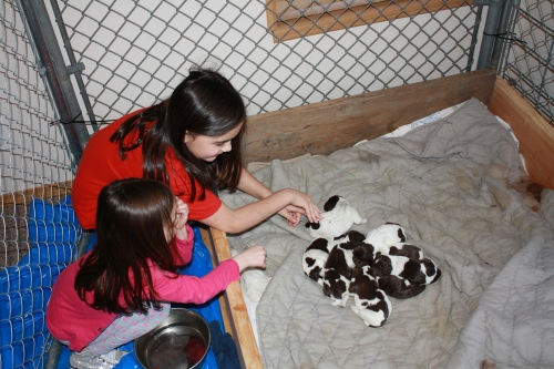 Avery and Josie giving Velma's puppies some love