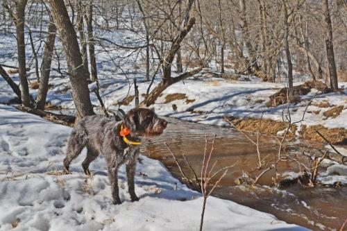 TracHer 3 years old by the creek